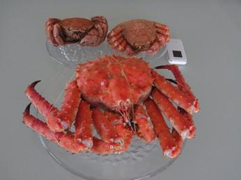 Crab_4