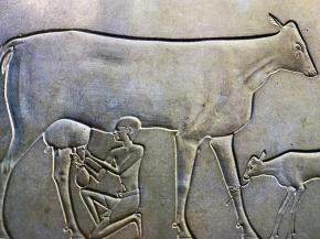Man-milking-cow